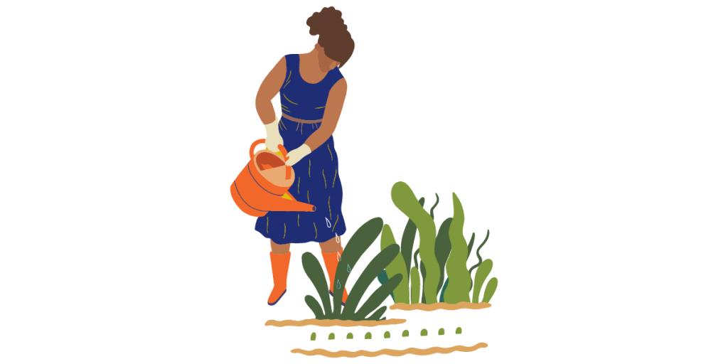 No ahogues tus plantas